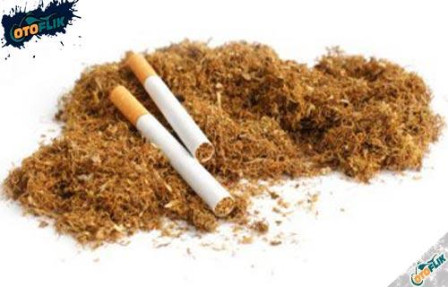 Pakailah Tembakau